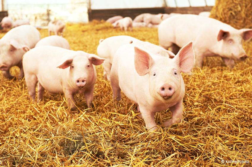 Fleischeinkauf – Auf die Haltung kommt's an!